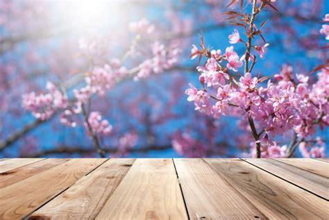 sfondi fiori di ciliegio pavimenti in legno e ha sfondo vedere i fiori di ciliegio