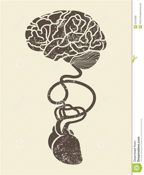 corazn y cerebro conceptual image of brain and heart connected toge royalty free stock image image 27274236