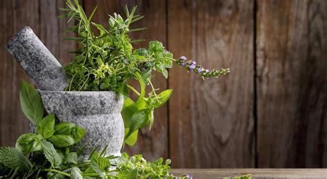 Garten Pflanzen Wenig Sonne by Der Gem 252 Segarten Im Schatten Welche Nutzpflanzen Gedeihen