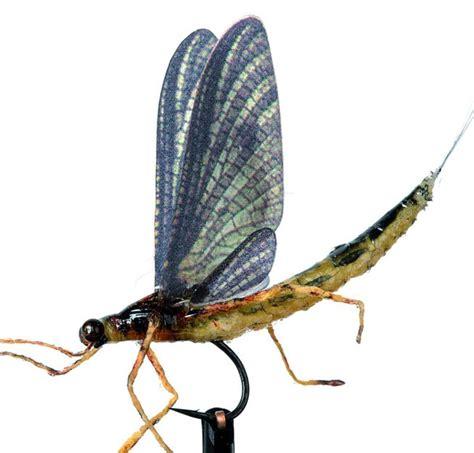 realistic ephemera danica set wings frostyfly
