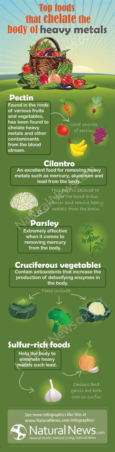 Aluminum Detox Diet by Top Foods That Chelate The Of Heavy Metals Detox
