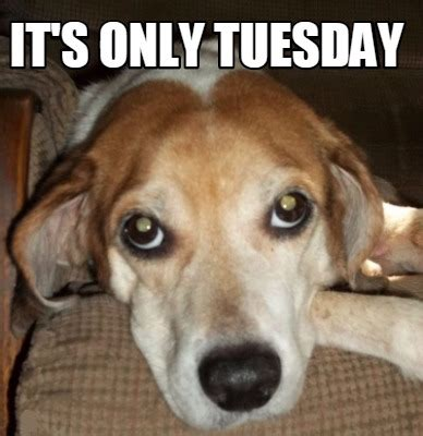 Tuesday Memes 18 - meme maker its only tuesday5