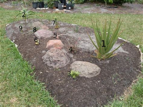 The Budget Gardener My First Rock Garden Florida Rock Garden
