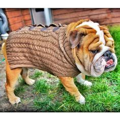bah humbug pug sweater 1000 images about sweaters jackets coats on sweaters