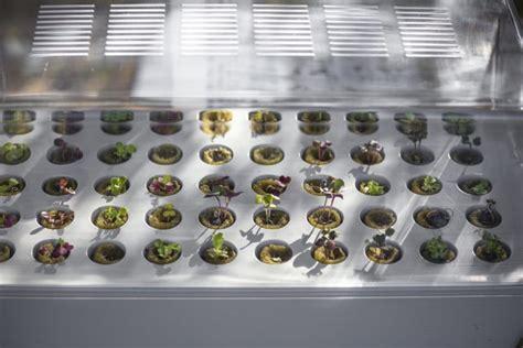 ikea vaxer zelf groente kweken met ikea s indoor moestuin eetblog nl