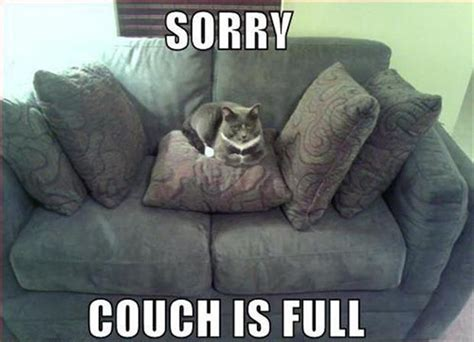 funny couch sorry couch is full memes comix funny pix