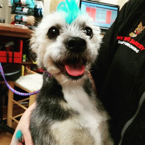 my dogs bakery grooming peoria il my s bakery daycare grooming