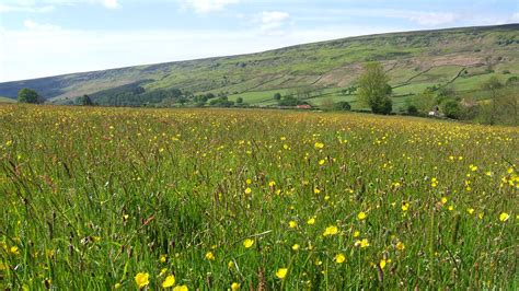 hay meadow the official blog for the north york moors