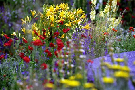 flower shoe rhs chelsea flower show breaks overview