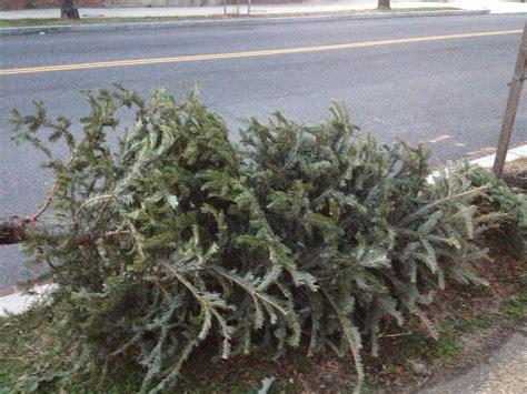 christmas tree disposal christmas decore