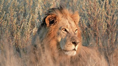 maasai mara holidays book     maasai mara experts today