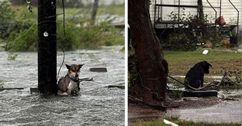 hurricane harvey dogs some left their dogs up to die during hurricane harvey