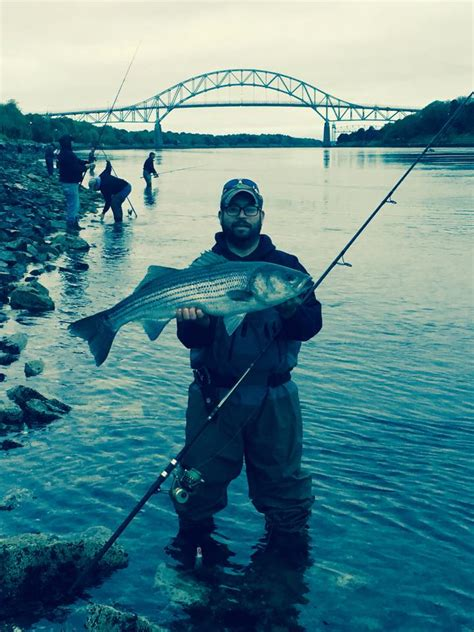 cape cod court reports cape cod canal fishing report september 17 2015 salty