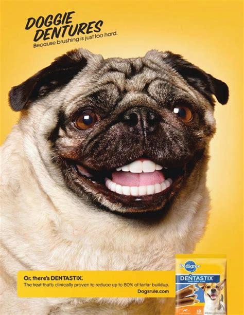 pug magazine pug magazine ad 2 by bpeggau issuu
