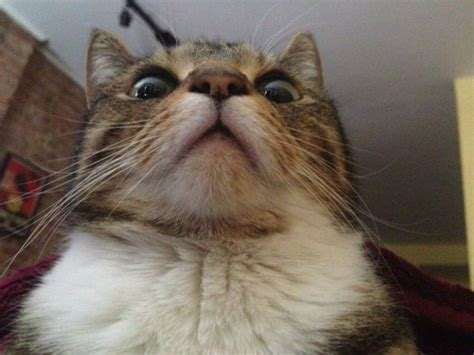 Fuck You Cat Meme - 爆笑动物搞笑趣图 新闻中心 中国网