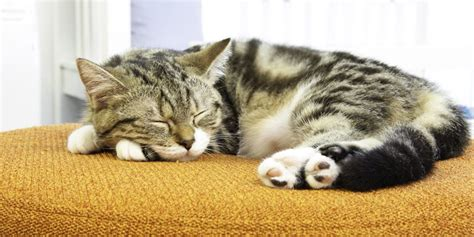 Sleep Cats 6 interesting facts about your cat s sleeping habits