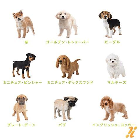 nintendogs golden retriever ds de 27 hondjes nintendogs cats op een rijtje media nintendo 3ds n1ntendo