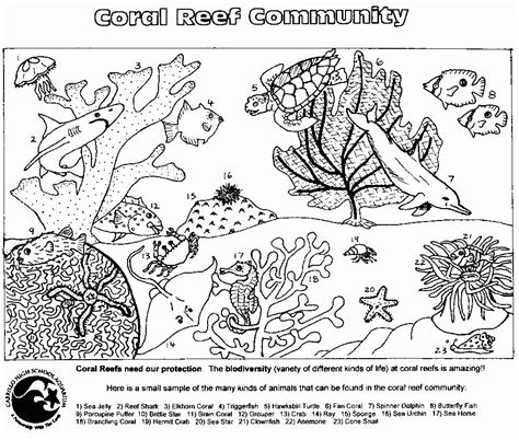 free coloring pages food web food web coloring pages coloring home