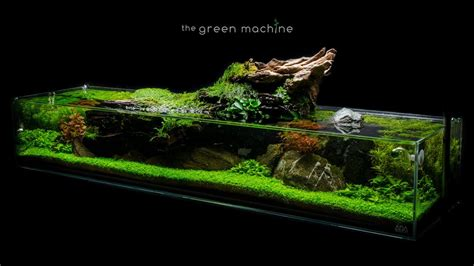 Tutorial Aquascape by Aquascape Tutorial Simplicity By Findley How To Create A Planted Tank