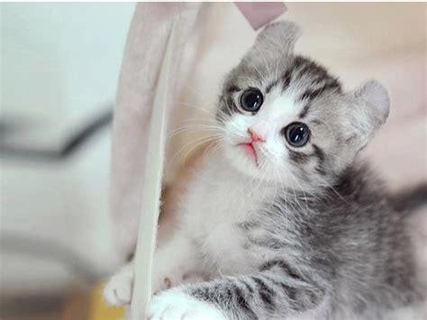 gambar dp bbm kucing lucu imut gemesin berbagai gadget