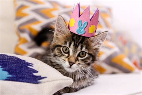 of a cat how to make your cat a festive easter parade hat sopurrfect