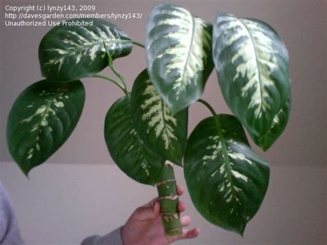 foliage house plants identification 1000 images about my house plants on