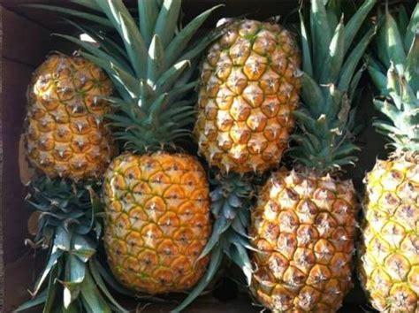 alimenti contro cellulite dieta 7 cibi anticellulite e contro la ritenzione idrica