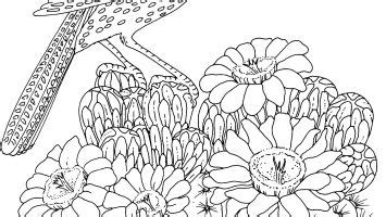 tree ring coloring page coloring pages of birds on tree limbs download coloring