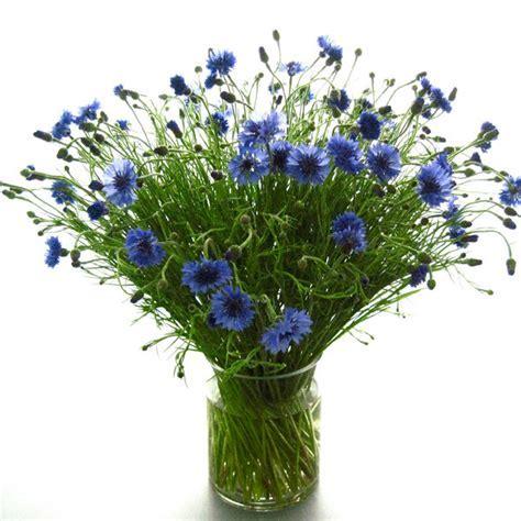Flowers in Season: June   BridalGuide