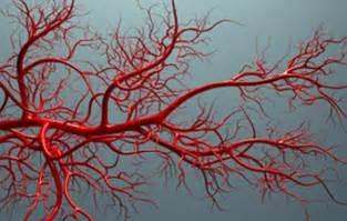 vasi sanguinei costruiti vasi sanguigni hi tech con una stante 3d
