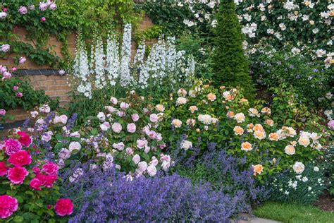 English Roses Are Some Of The Best Loved High Performance Flowers For Garden Borders