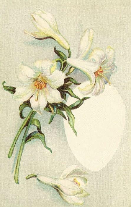 imagenes flores antiguas laminas antiguas de flores imagui