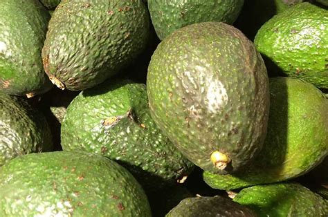 healthy fats in avocado dietary the the bad and the diabetic foodie