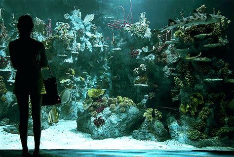 ocean life animated gif gif nature fish ocean sea marine life aquarium nature gif