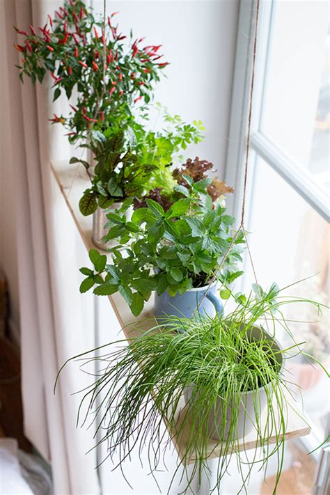 fensterbrett pflanzen befestigen indoor gardening gartenzauber