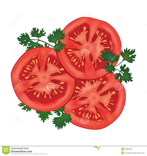 Big Ripe Red Fresh Tomato With Parsley Isolated On White