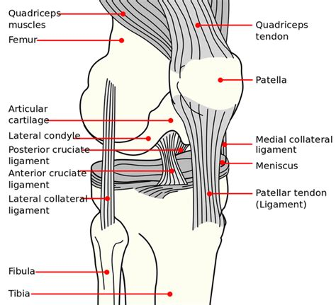 knee diagram common knee tests in orthopedic examination physical