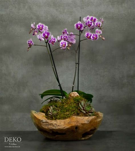 garden orchids and roses auf pinterest orchideen dfte diy orchideen effektvoll dekorieren deko kitchen plants