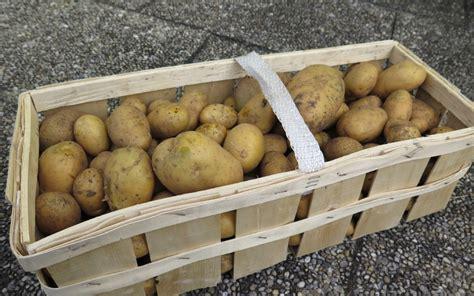 kartoffeln im garten kartoffeln im garten pflanzen und ernten gartenmoni
