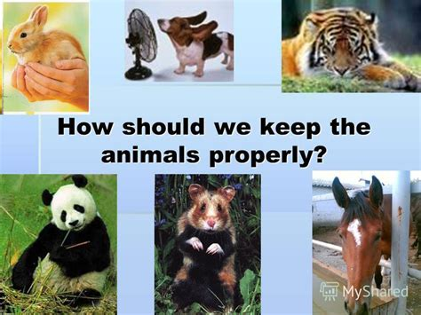 презентация на тему quot how should we keep the animals