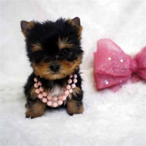 24 insanely adorable teeny tiny pups weknowmemes