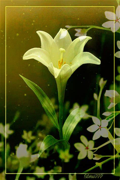 imagenes de rosas blancas para facebook imagen de rosa con movimiento luminosas esperandolos