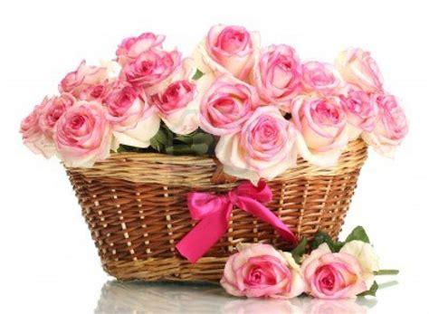 imagenes de rosas rojas y rosadas cesto de rosas rosas im 225 genes y fotos