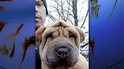 puppy stores in nh dognapping 4 arrested in theft of 13 pricey puppies from new hshire pet