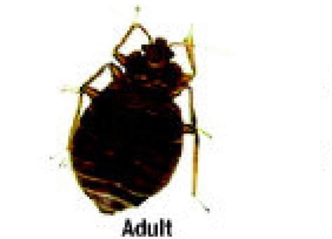 bed bug extermination professional expert bed bug control extermination service