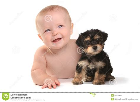 yorkies as pets adorable baby boy with his pet teacup yorkie puppy stock photo image 44537968