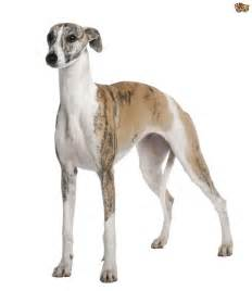 Dog 3 Dog Breeds Often Confused With Similar Looking Breeds