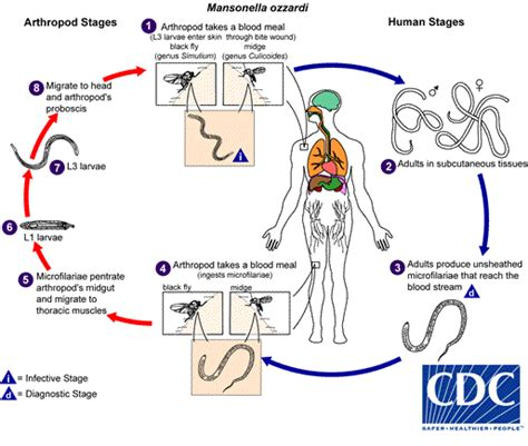 Atlas Daur Hidup Parasitologi Kedokteran nurafni radji nematoda darah dan jaringan