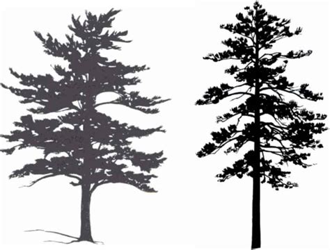 The Watcher In The Pine tree silhouettes small tree medicinal plants archive