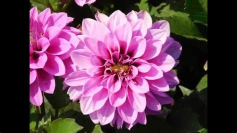 imagenes de flores y sus nombres related keywords suggestions for nombres flores bonitas